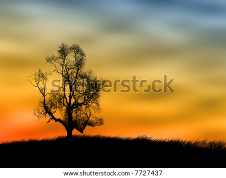 Tree silhouette on the field against a sunset sky