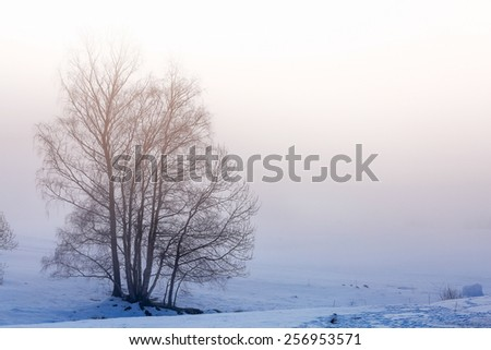 Tree Silhouette on the snow and fog - stock photo