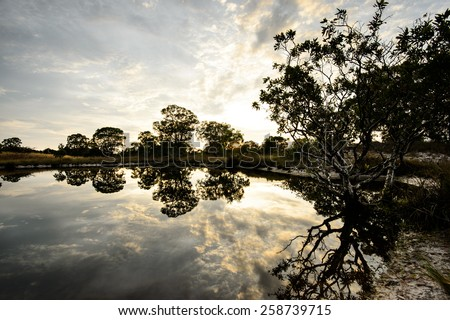 tree silhouette reflected in a lake - stock photo