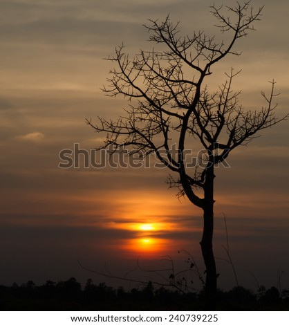 Tree silhouette  twilight time at National Park, Thailand