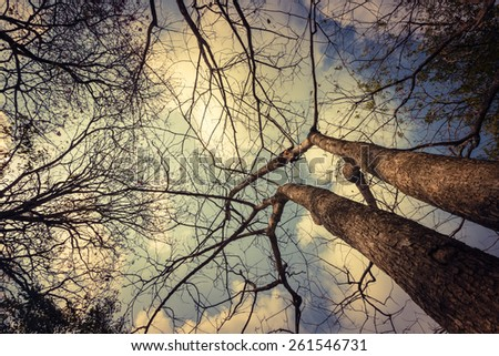Tree silhouette with cloud - stock photo