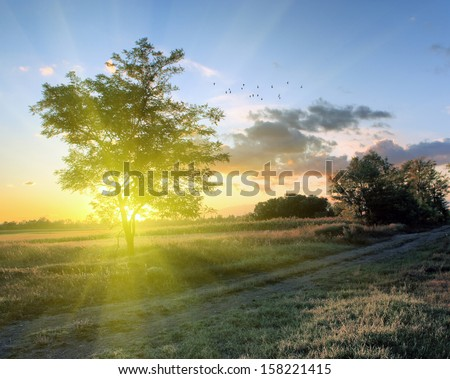 Tree silhouette with flying birds - stock photo