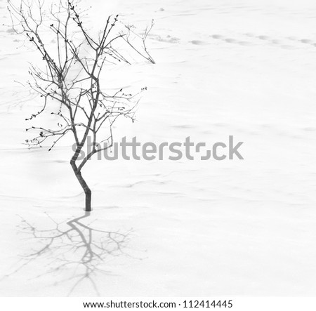 Tree silhouette with shadow on the snow background - stock photo