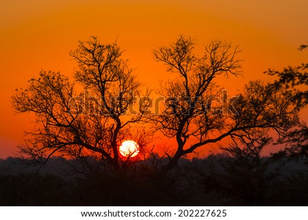 Tree silhouetted against a colorful orange sky