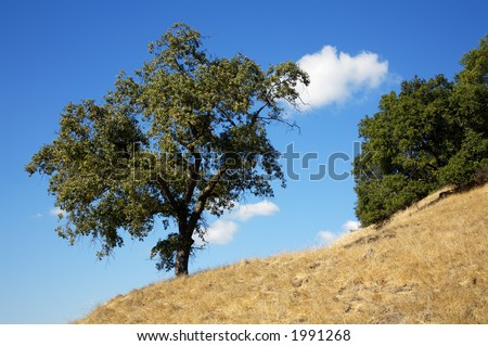 Tree silhouetted against blue sky