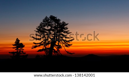 Tree Silhouetted against Sunset in Northern California, USA - stock photo