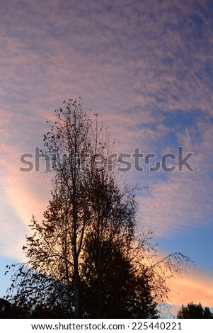 Tree silhouettes against sunset sky - stock photo