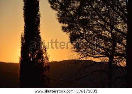 Tree silhouettes at sunset vibrant orange. - stock photo