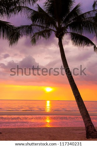 Tree Silhouettes Evening Scene - stock photo
