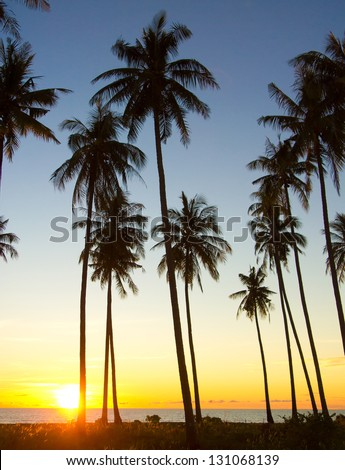 Tree Silhouettes Fiery Backdrop - stock photo