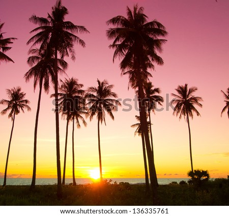 Tree Silhouettes Fiery Backdrop - stock photo