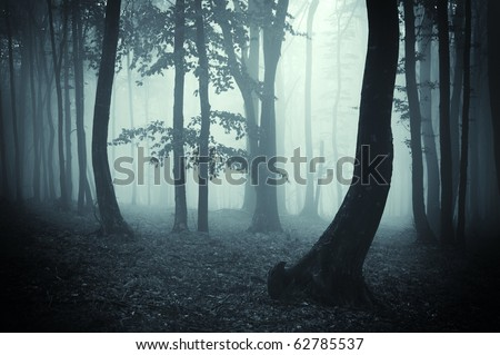 tree silhouettes in a dark forest - stock photo