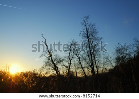 Tree silhouettes in the sunset