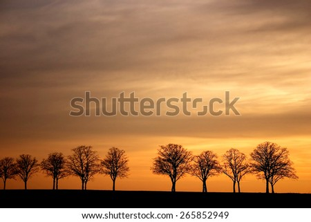 Tree Silhouettes in the Sunset, Germany - stock photo