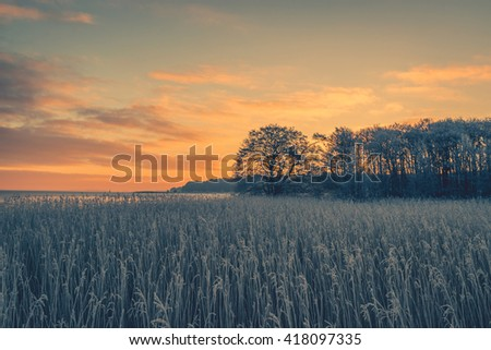 Tree silhouettes in the winter sunrise on a cold morning - stock photo