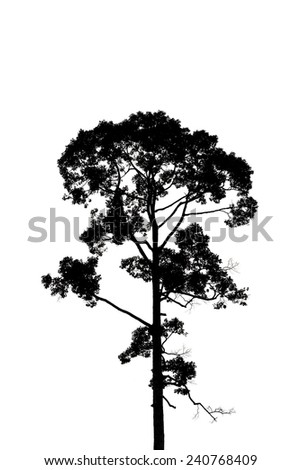Tree silhouettes isolated on white - stock photo