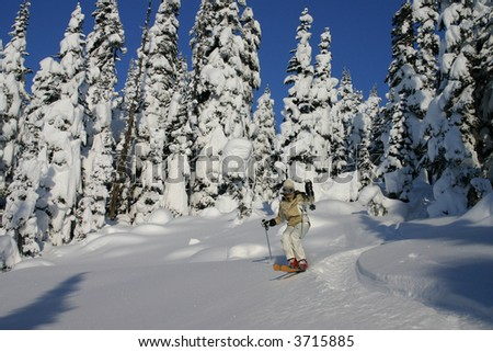 Tree Skiing - stock photo