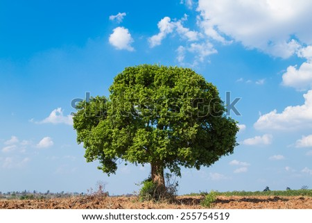 Tree & Sky  - stock photo
