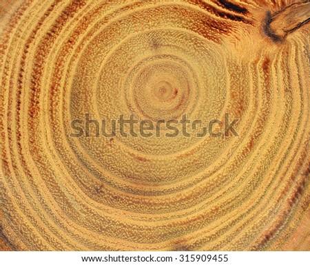 Tree slice background - stock photo