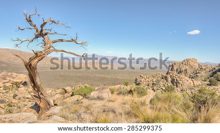 Tree snag on Teutonia Peak Trail, in the Mojave National Preserve, California. - stock photo