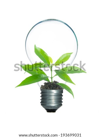 Tree sprout inside lamp light bulb isolate on over white background - stock photo
