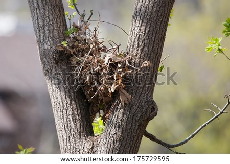 Tree squirrel nest high up in a leafy tree. - stock photo