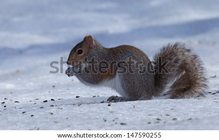 Tree squirrel on ice that looks like it is praying for spring