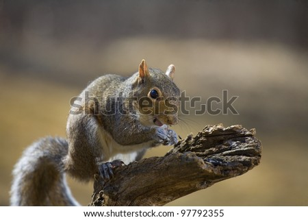 Tree squirrel taken strobist style with sunflower seeds flying