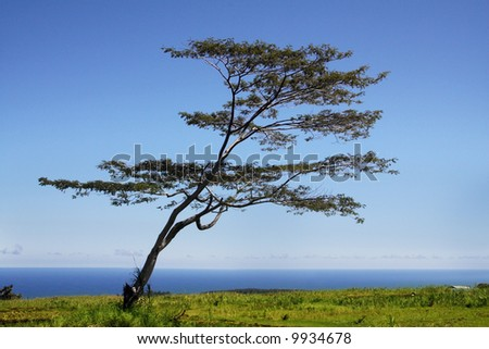 Tree standing by the ocean on grass