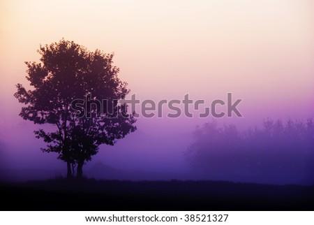 Tree standing in foggy purple sunrise - stock photo