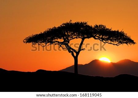Tree standing silhouetted against the morning sunrise - stock photo