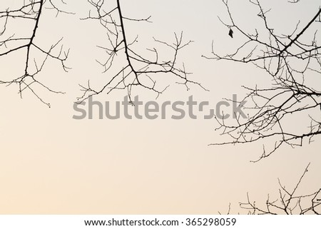 tree stem shape in winter with white background