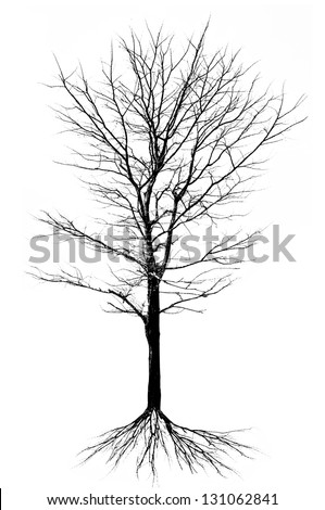 Tree structure - isolated - stock photo