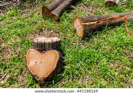 tree stump and timber, log, wood lumber - stock photo