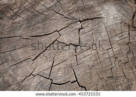 Tree stump background. Old timber and trunk texture. - stock photo
