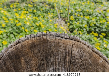 Tree stump closeup. Yellow flowers background. Cutting down tree - stock photo