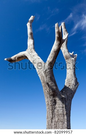 Tree stump in front of blue sky