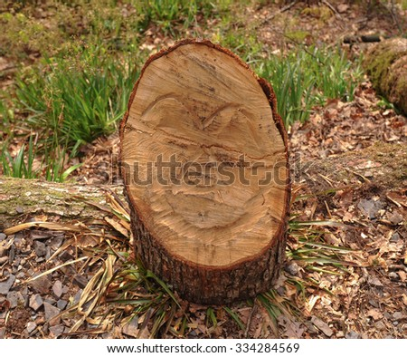 Tree Stump in Woodland by the River Teign in Devon, England, UK - stock photo