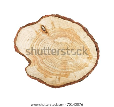 Tree stump isolated on white background - stock photo