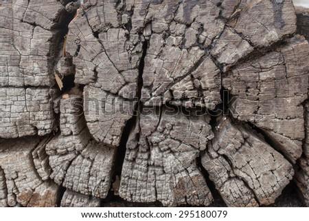 tree stumps, woods structure - stock photo
