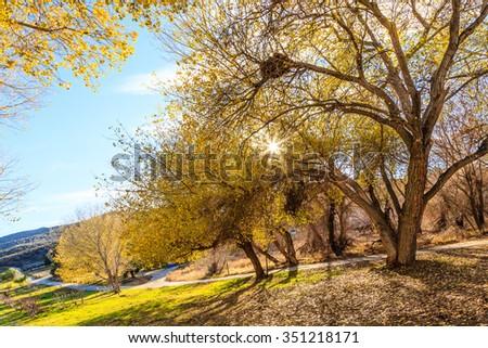 Tree Sunset - stock photo