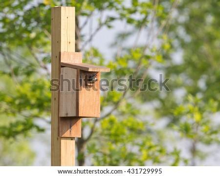 Tree swallow at bird house in Virginia. - stock photo
