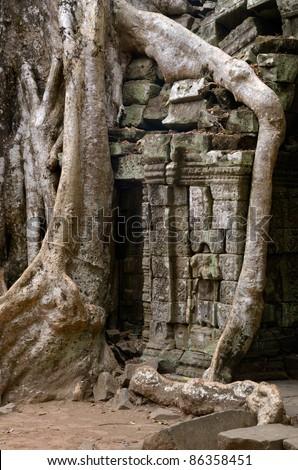Tree temple in Ta Prohm Angkor Wat - stock photo
