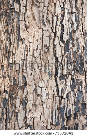 tree texture detail - stock photo