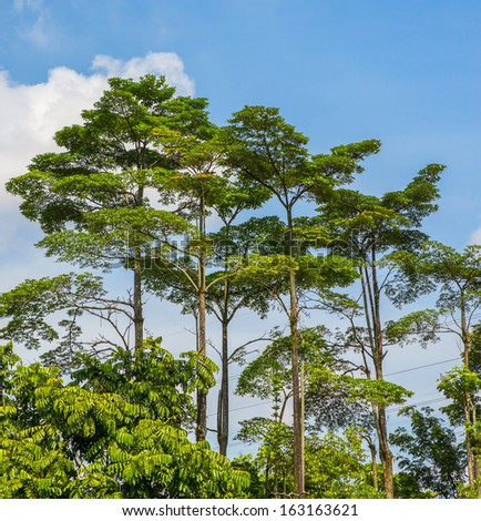Tree tops in a tropical jungle - stock photo