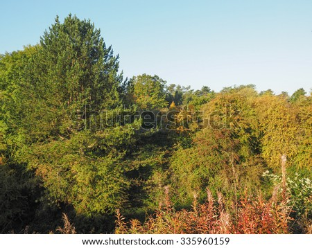 Tree tops over the blue sky in autumn - stock photo