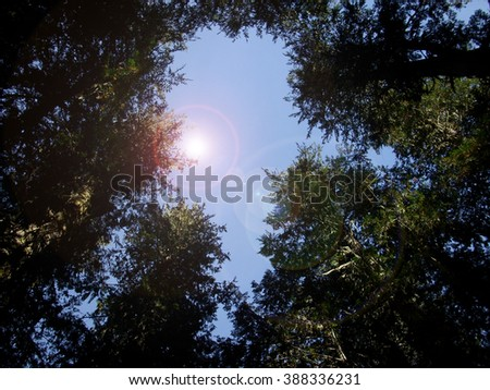 Tree tops to sky - stock photo