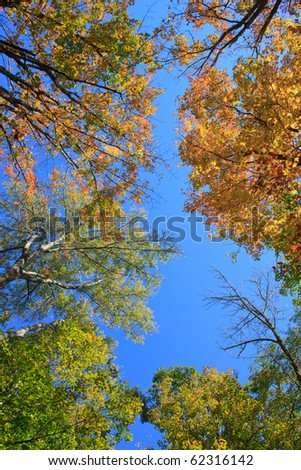 tree tops with fall foliage in the warm sunlight - stock photo