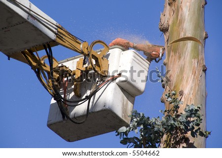 Tree Trimmer - stock photo