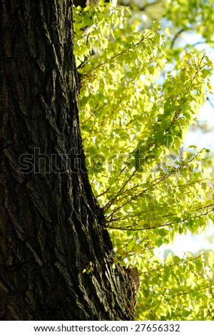 Tree trunk and green branches